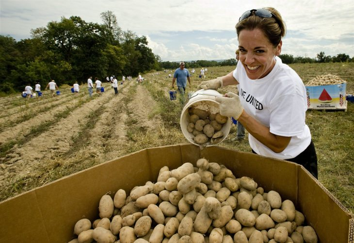 Lori Fountain Bales, an owner of Body Renew Corporate Wellness in Winchester, dumps a load of potatoes from the Volunteer Farm into a bin on Wednesday during the Day of Caring by the United Way of Northern Shenandoah Valley. There were 150 volunteers from six organizations who volunteered their efforts to pick 9 tons of potatoes and tomatoes.    Rich Cooley/Daily